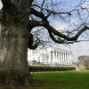 Oak tree at Oldway Mansion, Paignton