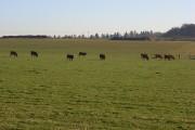 Pastures, Little Coxwell