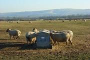Pastures, Longcot