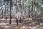 Edgebarrow Wood