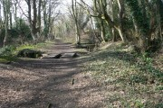 Broadoak Wood, Connah's Quay