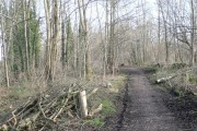 Gathering Woods, Connah's Quay