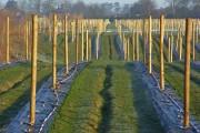 Fruit-farming, Wargrave