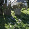 Gravestones and crocuses, Chagford