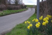 Hooray! the Daffs' are out at Sheinton bridge.