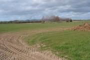 Flat farmland at Tirley Knowle
