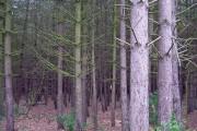 Unusual woodland