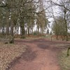 Sherwood Forest - Woodland Footpaths