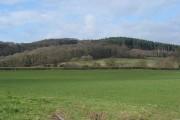 Woodland edge north of Fownhope