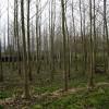 Young Plantation, Ryemeadow