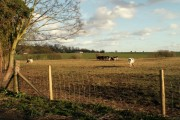 Farmland, just north of Waltham Abbey