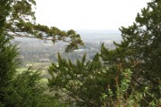 View through the trees over Reigate Heath