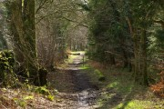In Kilsture Forest