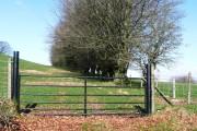 Tempting gate