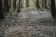 Woodland ride on Cottagers Hill (3)