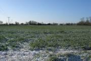 An oil seed rape crop in snow