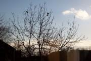 7 Pigeons, 1 Tree