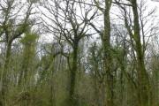 Ilsington Woods