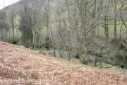 Afon Caws
