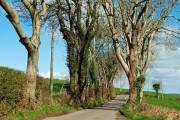 The Slievegrane Road near Saul