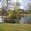 Gannochy duck pond