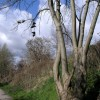 An ash tree brings forth shoes
