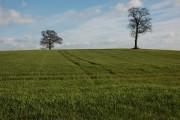 Farmland at Broom's Green