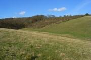 Pasture and woodland, Pishill