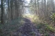 Track through Beacon Hill Wood