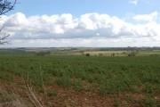 Farmland near Roel Gate in Spring