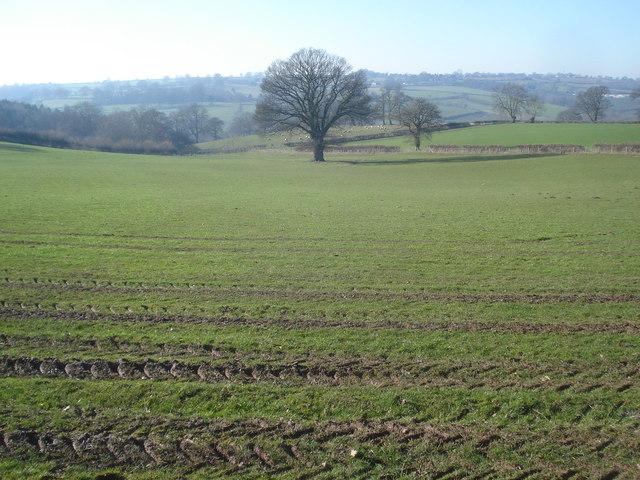 Large field at Hill Farm