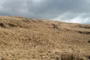 Slopes of Beinn Sgaillinish