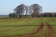 Farmland near Hungerford
