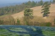 Farmland, Wargrave