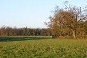 Pasture and woodland, Englefield