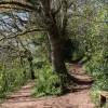 Paths, Occombe Valley Woods