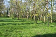 Woodland by the A10 - early spring