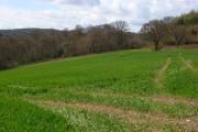 Farmland, Piddington