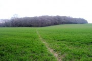 Middle Coppice