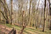 Coed Troedrhiwseiri Woodland