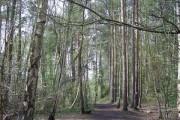 Woodland near Heath Lake