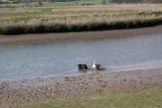 River Blyth near Blythburgh