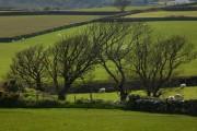 Farmland, Maughold