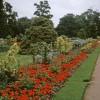 Flowerbed, Jephson Gardens, Royal Leamington Spa, Warwickshire taken 1964