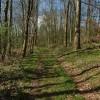 Track through woodland, Washbourne Hill