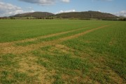 Winter Cereals and Dumbleton Hill