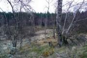 Birch woodland at Boblainy