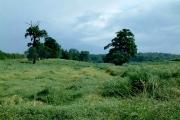 Farmland from the Lea Valley Walk