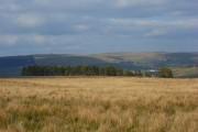 Rough pasture and plantation above Leadgate