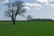 Field near Manor House Farm, Routh